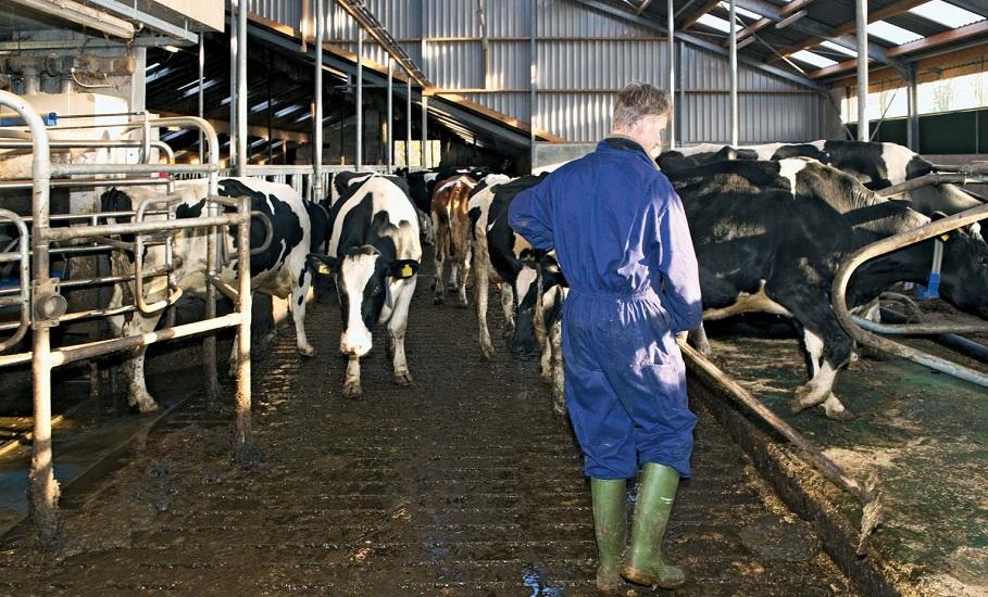 Azienda Agricola cerca un addetto al bestiame, pulizia stalle e manutenzione - Alloggio in azienda incluso