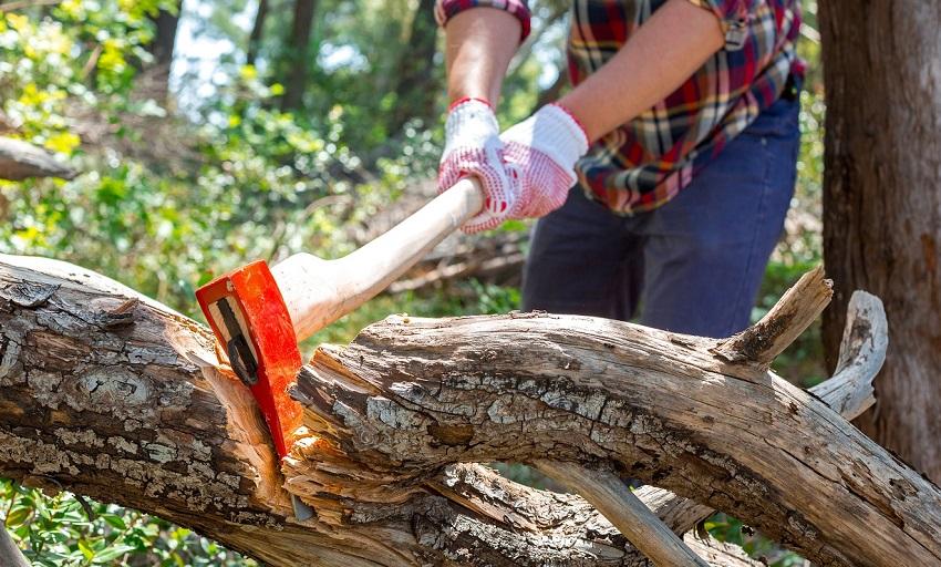 Cercasi Tirocinante Boscaiolo per Carico e scarico legna, taglio legna e sfoltitura alberi e manutenzioni delle aree agricole a Meana Sardo (NU) - SCADENZA CANDIDATURA  19/08/2019