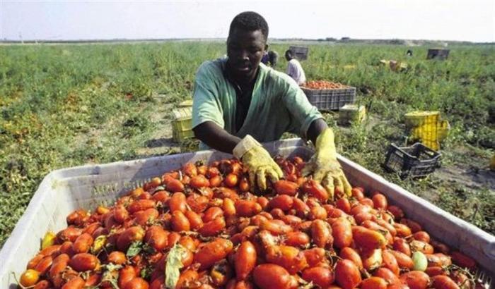 Cercasi 1 Bracciante agricolo per inserimento in azienda coltivazione di pomodori in serra