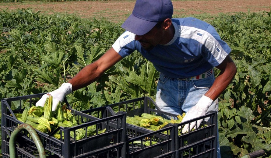 Azienda Agricola del Sud Sardegna cerca 2 braccianti agricoli per predisposizione terreni, raccolta prodotti e carico mezzi