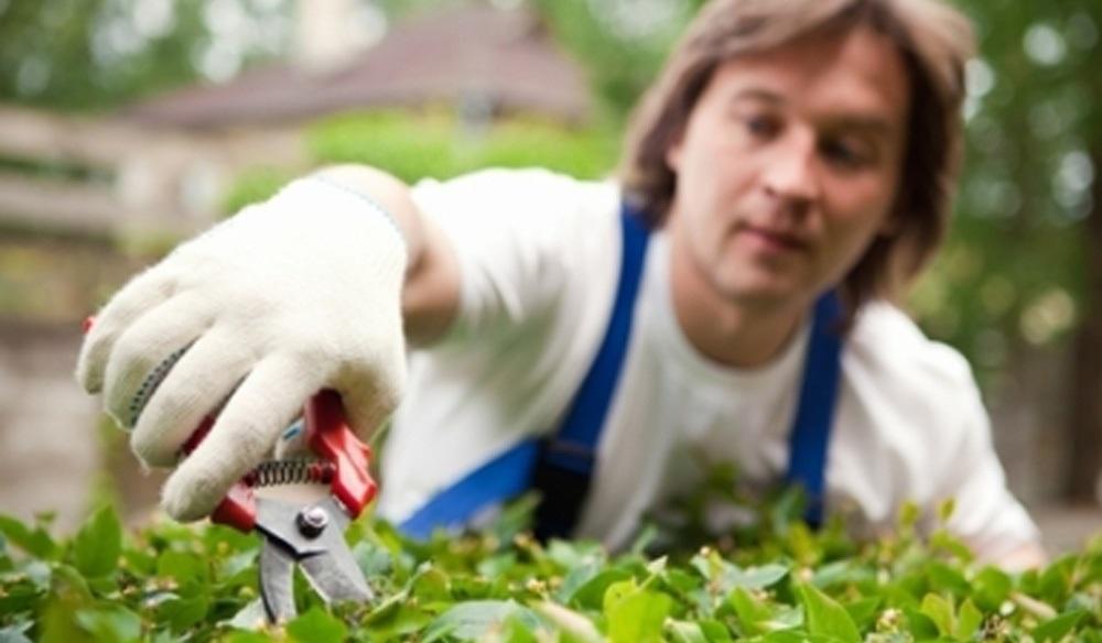 Cercasi Giardiniere con Disponibilità immediata da inserire presso azienda Servizi a Pula (CA)