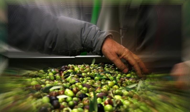 Cercasi Frantoiano da inserire presso frantoio trasformazione olive in olio a Sassari