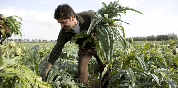 Azienda Agricola a Samassi (SU) cerca 2 Braccianti agricoli addetti alla coltivazione e raccolta dei carciofi